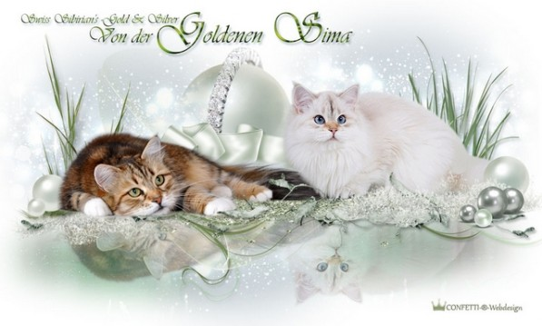 Cattery Goldenesima